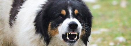 Hondenbeet Enschede