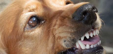 hondenbeet schadevergoeding