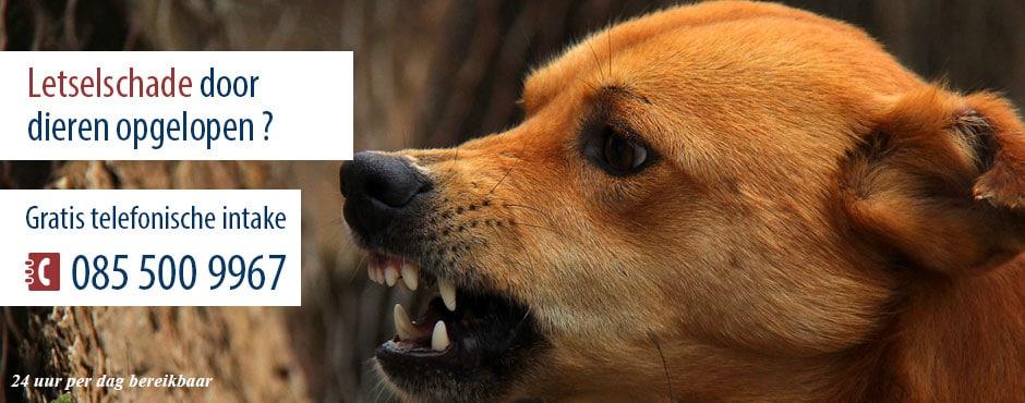 Letselschade door dieren